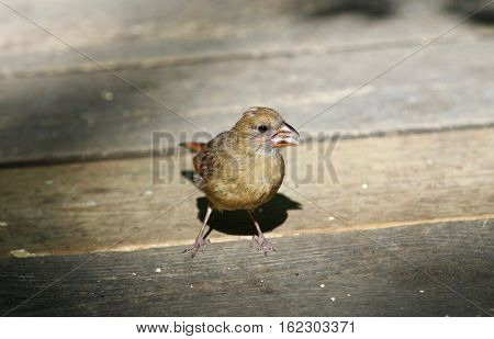 Beautiful Isolated Photo With A Funny Bird On The Wooden Floor