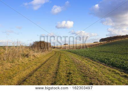 Bridleway In Farmland