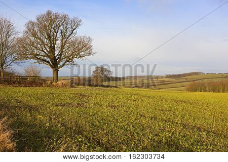 Fodder Crops And Countryside