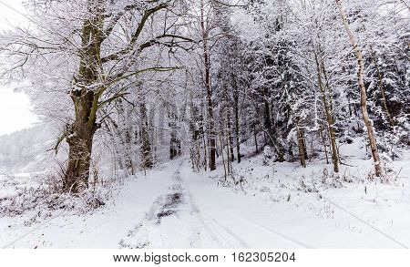Forest road and trees covered with snow. Moravian landscape Pilske udoli.