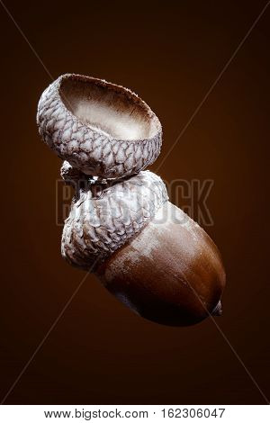 acorn of oak isolated on a brown background