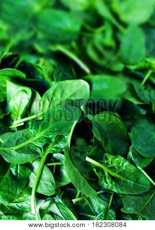 Fresh green baby spinach leaves as background close up