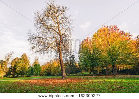Autumn Landscape With A Large Tree