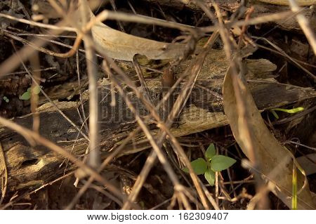Skink Small Twigs Secretly Slipped Beneath The Ground