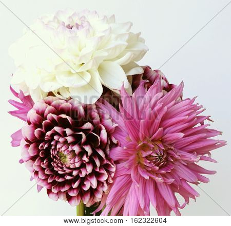 Bouquet of white violet and colorful dahlia -closeup