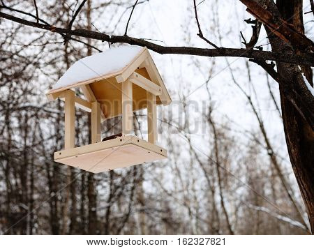Birdfeeder On Tree Branch In Woods In Winter