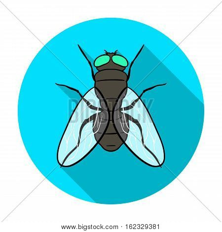 Fly icon in flat design isolated on white background. Insects symbol stock vector illustration.