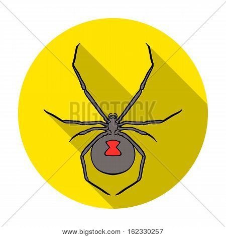 Black widow spider icon in flat design isolated on white background. Insects symbol stock vector illustration.
