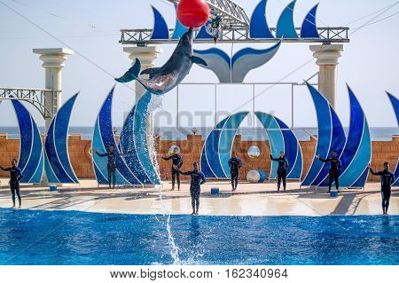 Alanya, Turkey - May 3, 2014: Dolphin Sealanya - shows featuring dolphins and sea lions. Dolphin jumping out of the water and pulls out at high altitude red ball.