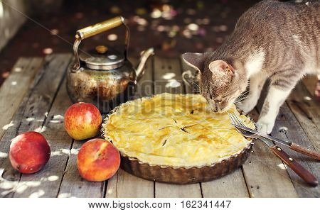Cat smelling a peach pie on wooden table with fresh fruits kettle fork and knife.