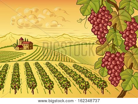 Vineyard valley landscape. Editable retro vector illustration in woodcut style with clipping mask.