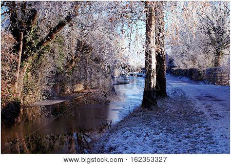Winter Snow Trees, Winter Wonderland, Pathway, Beautiful Scenery, White Christmas