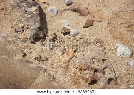 a rocky beach on a sunny shore