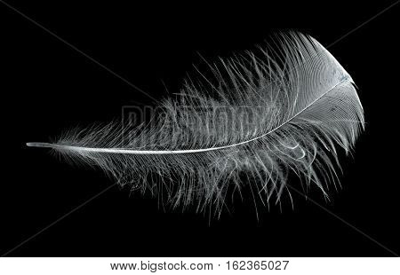 single black feather isolated on black background