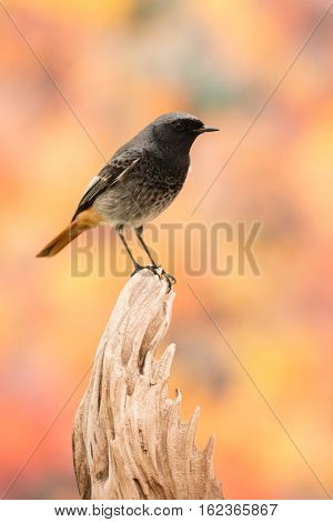 Small bird on a trunk with a beautiful colorfully background