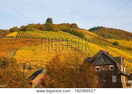 Autumnal Vineyards At The Moselle In Germany