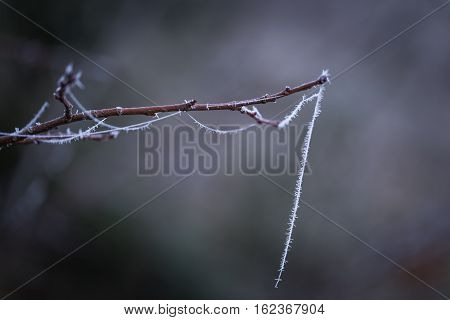 Close Up Of Frozen Spider Web