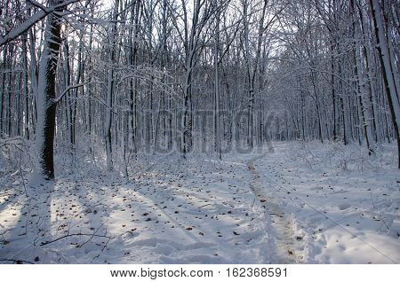 Trees covered with snow in the winter