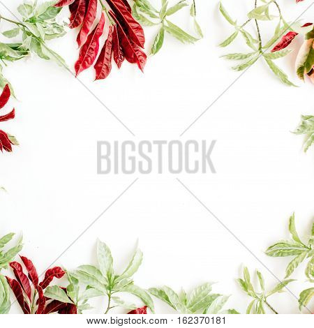 red and green leaves frame on white background. flat lay.