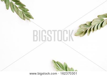 green branches isolated on white background. flat lay top view
