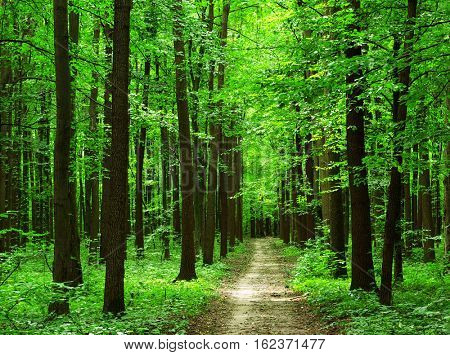 path is in the green forest