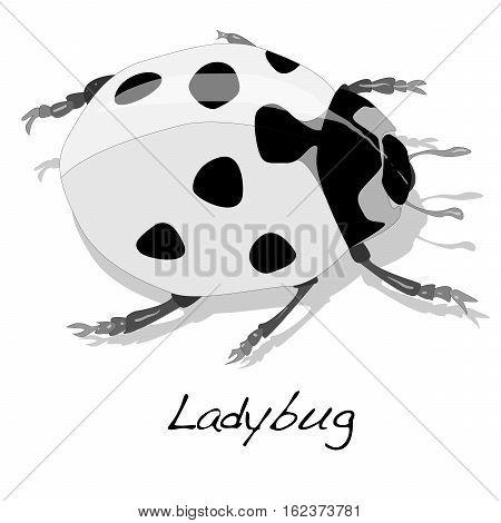 Ladybug Vector Illustration