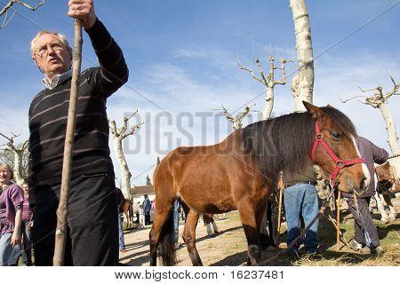 Fair in horses