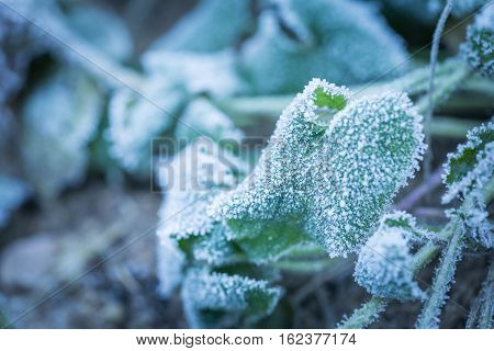 Rime On Plants