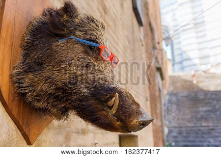 Stuffed Head Of A Boar Hanging At A Wall