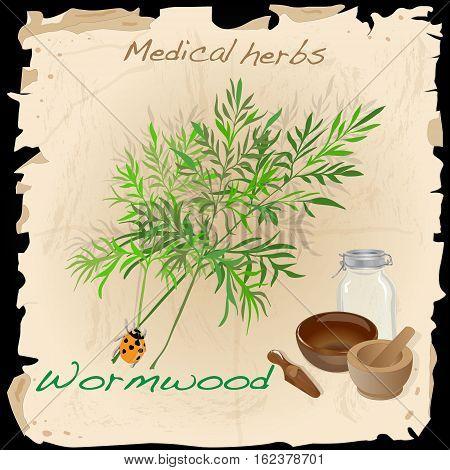 Wormwood. Medical Herb. Image isolated on white background.