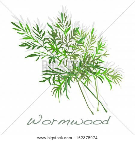 Wormwood Medical Herb. Vector.