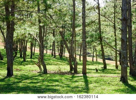 Landscape With Pine Forests At Sunny Day