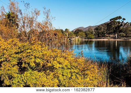 Fall colors at Lake Murray in San Diego, California with Cowles Mountain in the background.