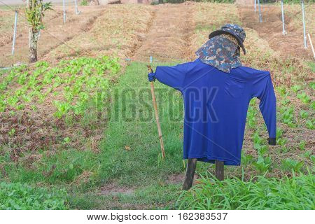 Scarecrow with organic vegetable plot in morning light.