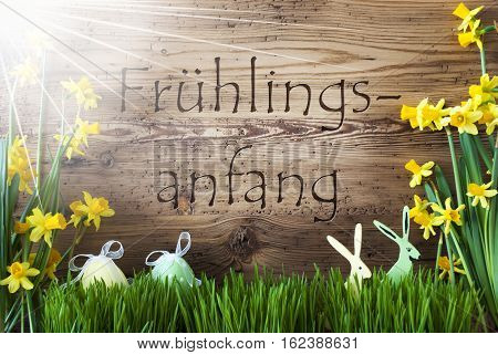 Wooden Background With German Text Fruehlingsanfang Means Beginning Of Spring. Easter Decoration Like Easter Eggs And Easter Bunny. Sunny Yellow Spring Flower Narcisssus With Gras.