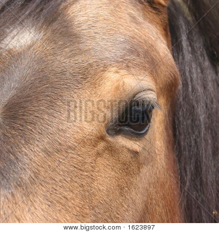 Very Close Up Of A Horse'S Eye