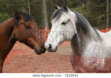 Two Horses Rubbing Noses In A Field