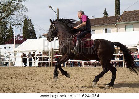 Minorcan horse