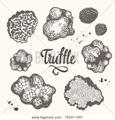 Vector illustration with set of mushrooms in sketch style. Hand-drawn truffle on white background. Delicatessen French mushrooms. Autumn forest harvest.