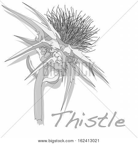 Milk Thistle Plant. Vector Isolated.