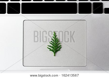 Christmas theme. Little new year pine tree laying on the touchpad of laptop. creative concept