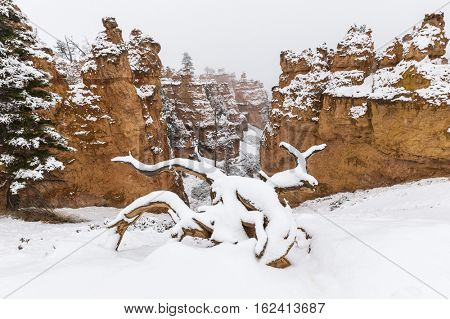 Winter snow covered hoodoos in Bryce Canyon National Park in Southern Utah.