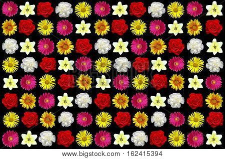 Colors of nature in the ornamental garden of colorful flowers in the collage.