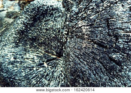 burnt tree trunk the black background of burnt wood