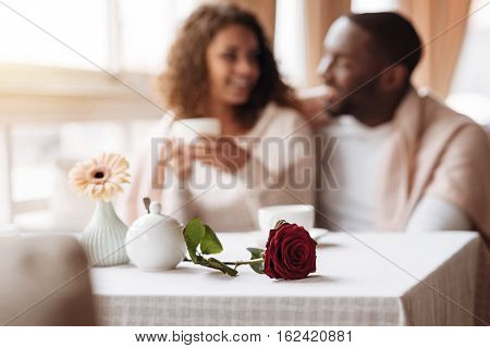 Our first date. Smiling merry glad African American couple having conversation in the cafe and being covered with a blanket while the flower lying on the table in front of them