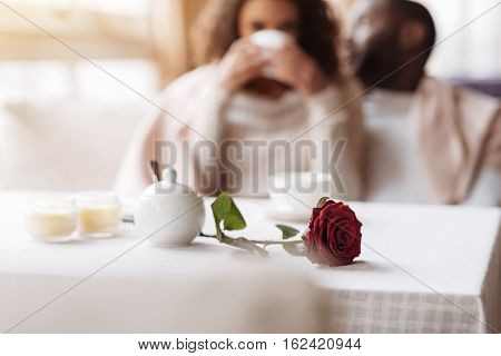Romantic dinner. Involved positive glad African American couple having the date in the cafe and being covered with a blanket while the red rose lying on the table in front of them