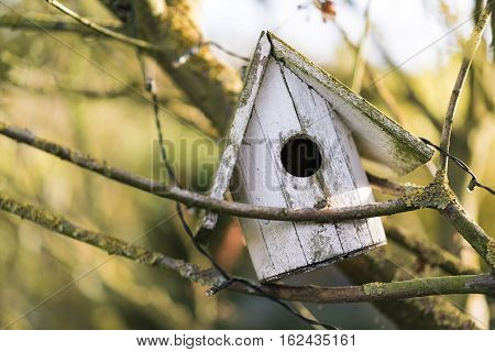 Old weathered wooden bird house with peeling paint caught at an angle in the bare branches of a tree