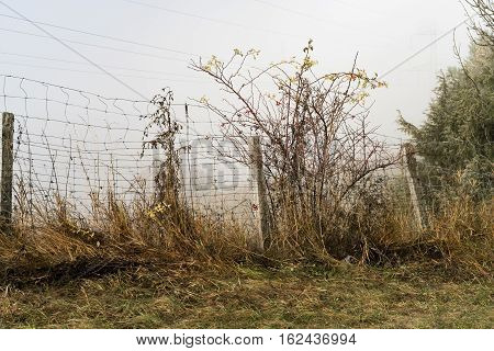 Weeds Growing Up A Rural Wire Mesh Link Fence