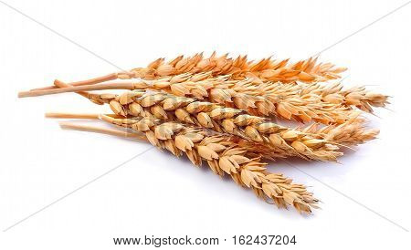Wheat isolated on white close up isolated.