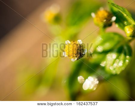 Beautiful little flowers with dew drop on spider web in morning for background. Selective soft-focus.